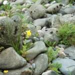 Riverbank Flowers